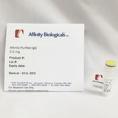 Anti-Human Thrombin Activatable Fibrinolysis Inhibitor (TAFI) Sheep, affinity purified IgG