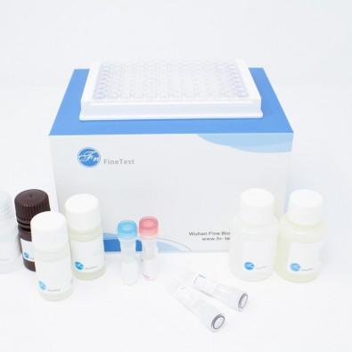 Mouse FV (Coagulation Factor V) ELISA Kit