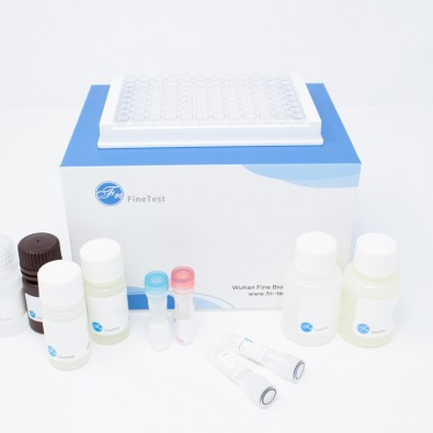 Mouse FX (Coagulation Factor X) ELISA Kit