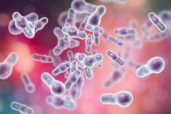 Clostridium difficile Toxin B (500µg)